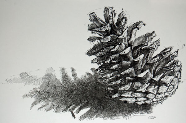 Pine cone in black ink