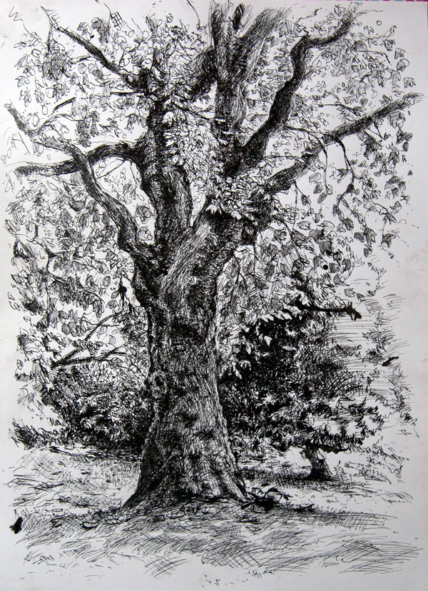 Pen and ink drawing of a tree, in Battersea Park