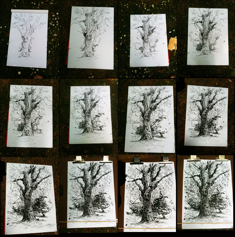 Progress of tree drawing over over time, shown in a series of 12 consecutive photos