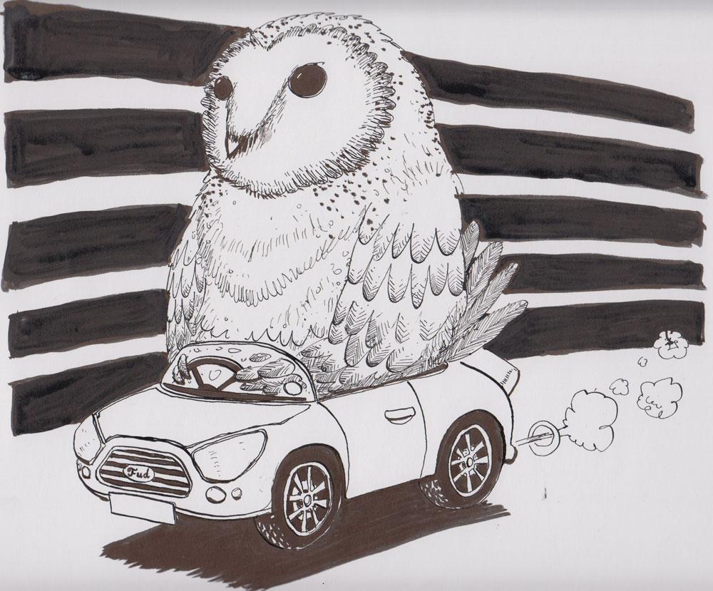 #19 Owl driving a car