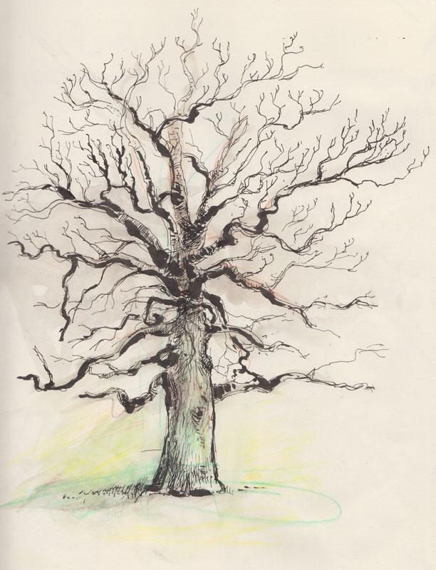 tree_2015_03_01